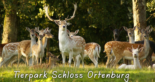Wildpark Ortenburg in Bayer. Wald