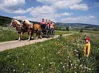 Kutschenfahren im Bayerischen Wald