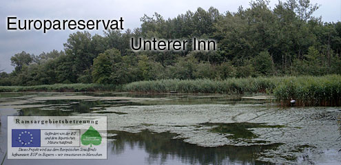 Europareservat Unterer Inn in Bayern