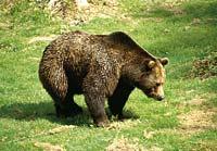 Nationalpark Tierfreigehege Bayerischer Wald