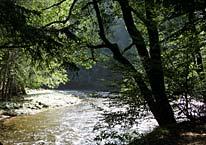 Natur im Böhmerwald in Tschechien