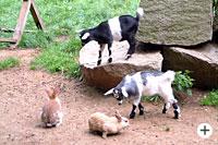 Streichelzoo im Tierpark Lohberg