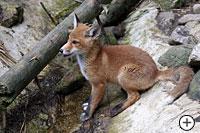 Tiere im Tiepark Lohberg im Bayerischen Wald