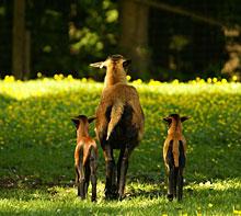 Ausflugstipp Tierpark Schloss Ortenburg in Bayerischer Wald