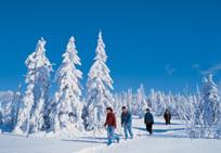 Winterurlaub Bayr. Wald