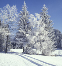 Langlauftour Freyung Mauth Finsterau Philipsreut Bayerischer Wald