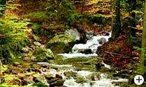 Wandergebiet Geißkopf Bayer. Wald