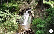 Bachlauf zur Rißlochschlucht Bayrischer Wald
